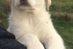 Giove, cagnolino nato nel mese di ottobre 2015