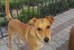 Fufi, 1 anno