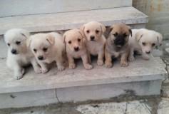 Diana (i suoi 6 cuccioli tutti adottati)