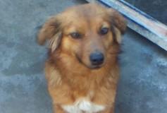 Sun ha 2 anni, in canile da 1 anno