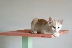 Turbo, 3 mesi , vivace e curioso, cerca casa!