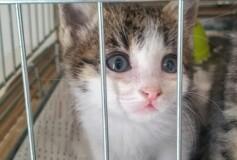 Aiutiamo questi splendidi mici a trovare una casa!❤️