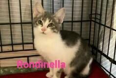 Rondinella vorrebbe volare per cercare una casa❤️