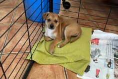 Tok, 2 mesi e mezzo, rimasto solo dopo l adozione del fratellino, cerca casa troviamola anche per lui!! Adottato❤️grazie!