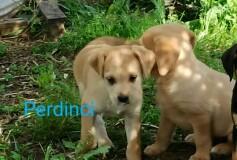 PERDINCI , nato il 18 marzo, HA TROVATO CASA e una nuova sorellina❤️!!