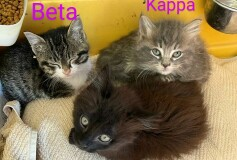 Beta, Delta, Gamma, Kappa e 0mega, 3 mesi circa, CERCANO CASA❤️