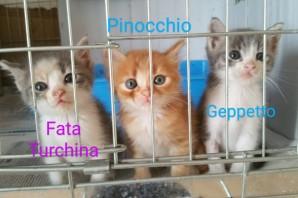 Fata Turchina, Pinocchio e Geppetto in CERCA di CASA❤️