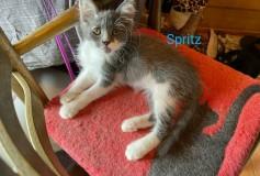 Spritz cerca Casa