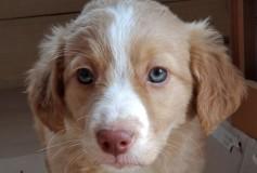 Lime nata il 19-12-2017