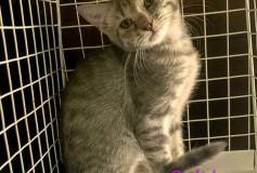 Salvia, 5 mesi, in cerca di casa!