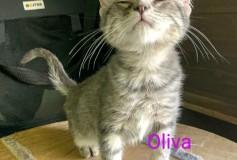 OLIVIA 6 MESI CERCA CASA