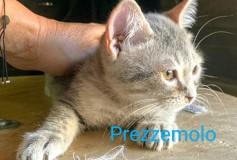 PREZZEMOLO, 6 mesi , taglia piccola , IN CERCA DI UNA CASA!