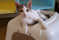 Mignon 5 mesi  tenera micetta, cerca casa❤️