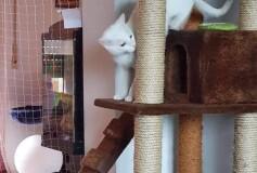 Cosimo nella sua nuova casa: adottato e felice con il suo amico Pilú ❤️