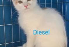 Diesel adottato❤️