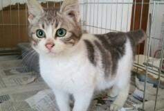 Polly piccolina , 3 mesi circa, occhi azzurro mare , uno splendore di gattina ha trovato la sua nuova Casa❤️