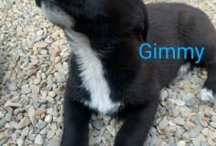 GIMMY CERCA CASA❤️