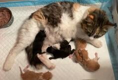 Licia ha partorito! Ecco i suoi nuovi magnifici cuccioli❤️