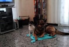 Pongo e Bella, gli inseparabili, Cercano Casa INSIEME❤️