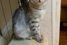 KEPLERO adottato con il suo gemellino GHIBLY!