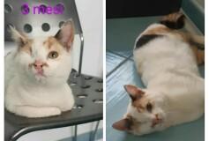 Mina , 3 mesi, segni particolari: bellissima, di oggi la bella notizia che Mina é stata adottata!!