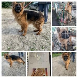 Marlene e gli altri cani sequestrati cercano casa!