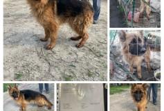 MARLENE fa parte dei cani sequestrati e cerca casa