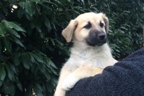 Marte, cagnolina nata nel mese di ottobre 2015