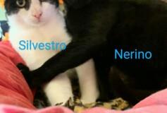 Silvestro e Nerino in cerca di casa!