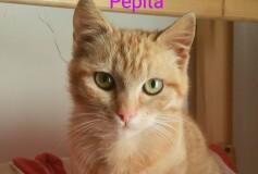PEPITA 5/6 mesi una dolcezza di gattina CERCA CASA❤️