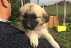 Saturno, cagnolino nato nel mese di ottobre 2015