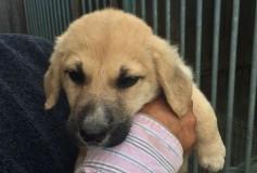 Venere, cagnolina nata nel mese di ottobre 2015