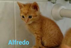 Alfredo, 2 mesi, cerca casa!