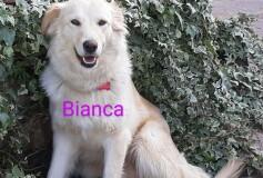 BIANCA, 3 anni, bellissima e buonissima con i bambini, Cerca Casa❤️