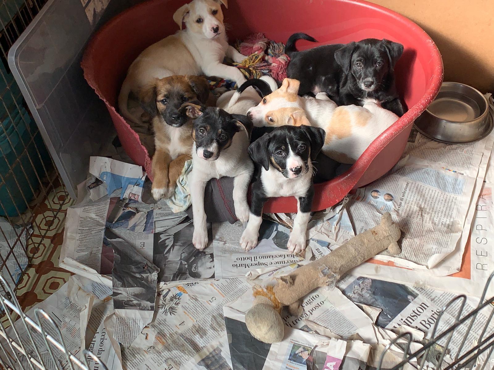 Foto di famiglia dei cuccioli di Lalla in attesa di partire per le adozioni