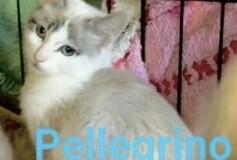 Pellegrino 3 mesi CERCA CASA!!