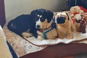 ILONA ,tra i cani del sequestro di un anno fa, felice nella sua nuova casa