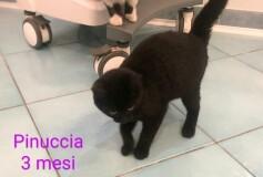 Pinuccia , 3 mesi , CERCA CASA