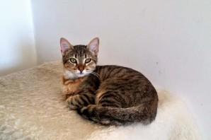 VAGABONDA gattina tigrata 1 anno PARTITA per l'ADOZIONE!